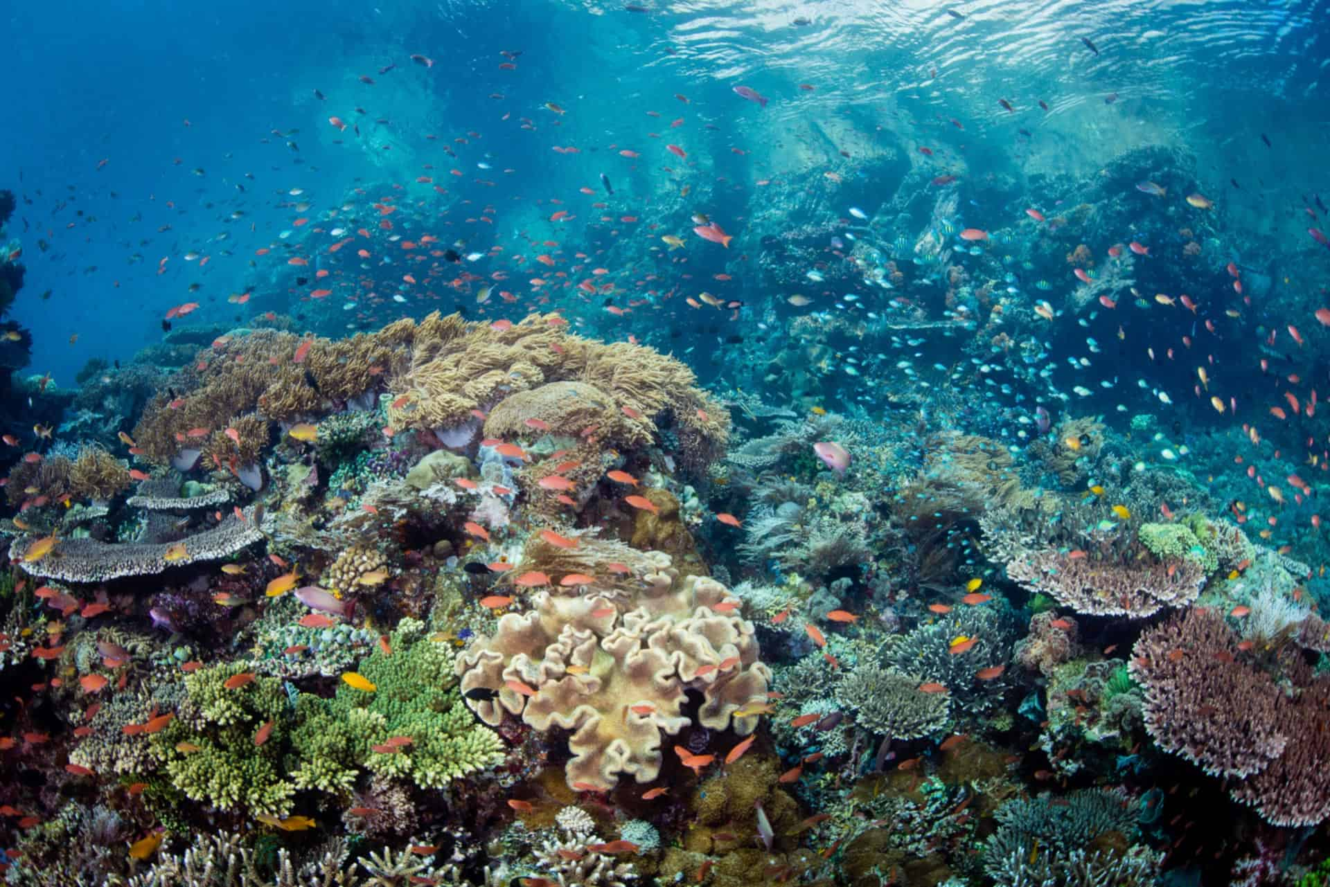 Underwater Tribe | Dive Bali and Indonesia with UW ...