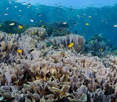 Bali Blast Menjangan – 4 Nights / 9 Dives
