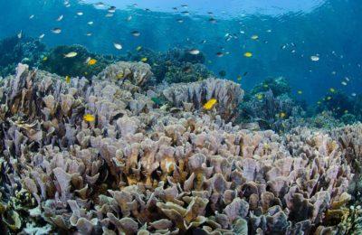 Menjangan Bali Scuba Diving Hard Coral Reef Bali Blast Menjangan