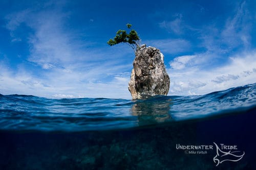 One Tree Rock Raja Ampat