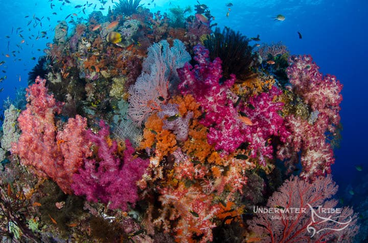 Top 5 Dives Sites in Raja Ampat 4 Kings
