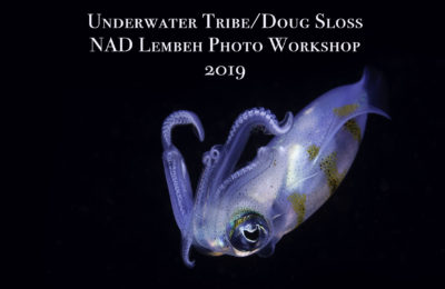 Lembeh Photo Workshop