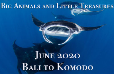 Big Animals 2020