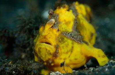 Lembeh Diving