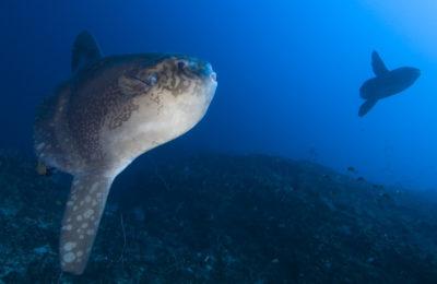 Nusa Penida Diving