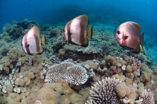 Menjangan Coral Reefs Bali