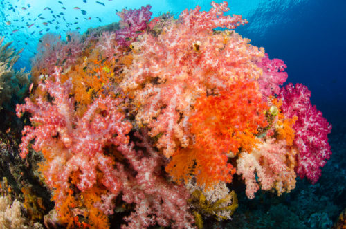 Banda Sea Raja Ampat Soft Coral Two Strobes