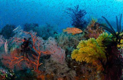 Banda Sea Raja Ampat