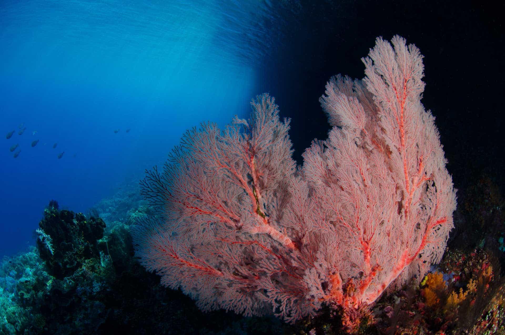 Underwater Photography Online Mentoring