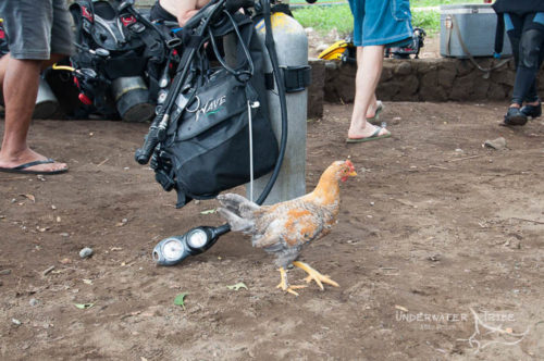 Chicken at Seraya Secrets