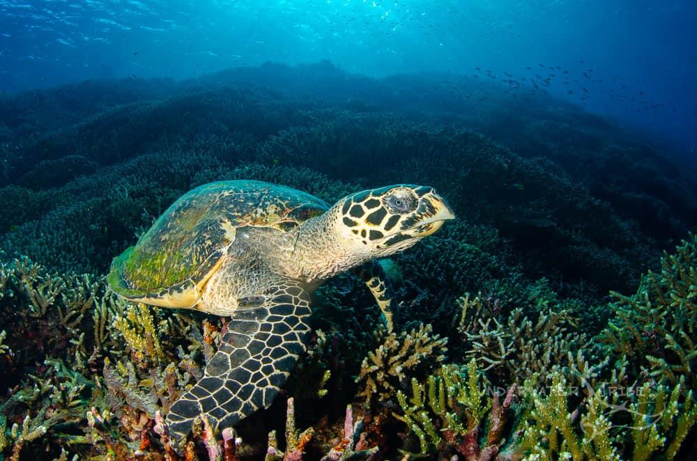 Underwater Photography Online