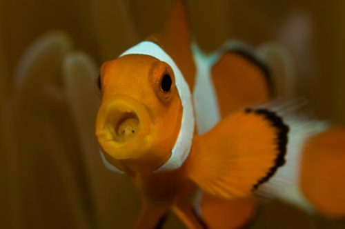 Underwater Photography Coaching