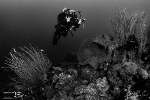 Photographer Rebreather Diving
