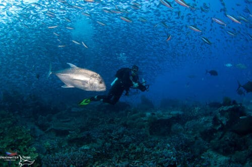 Giant Trevally Hunting