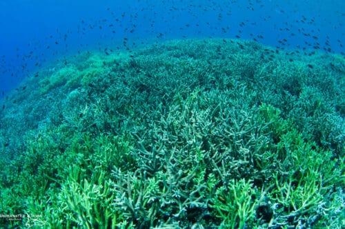 Hard Coral No Light