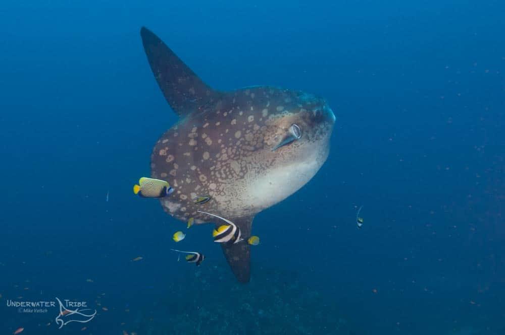 Bali Diving Opening